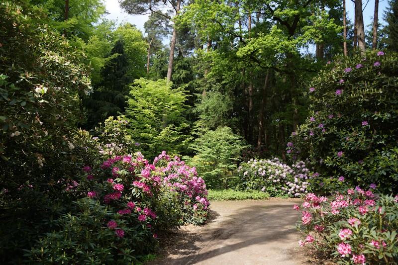 fahrradtour zum rhododendronpark bruns. Black Bedroom Furniture Sets. Home Design Ideas