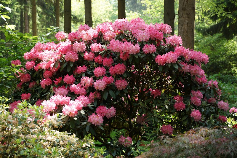 fahrradtour zum rhododendronpark bruns. Black Bedroom Furniture Sets. Home Design Ideas