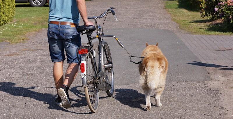 Hund neben dem Fahrrad