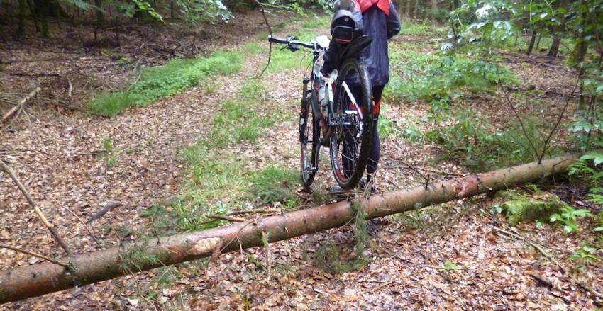 Fahrrad über einen umgestürzten Baum tragen