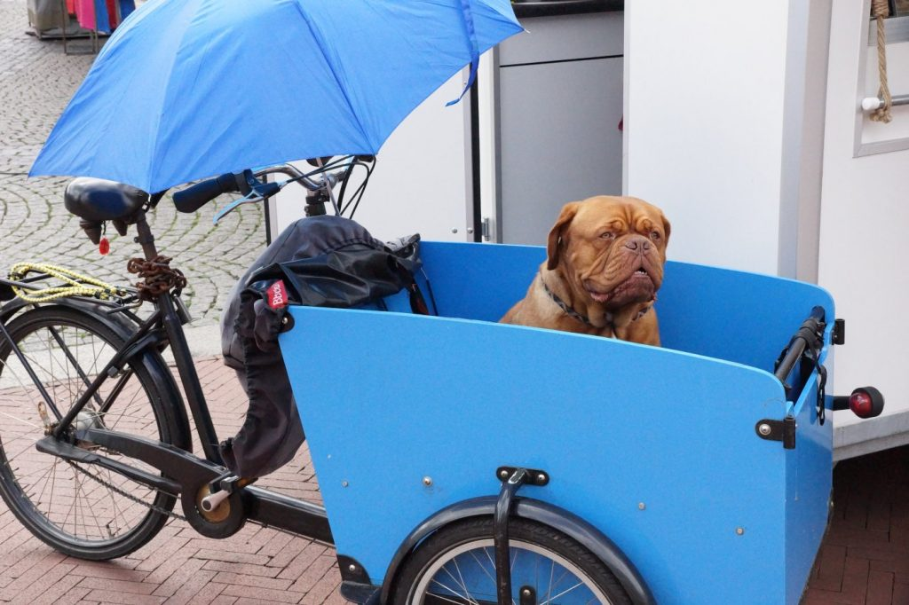 Lastenfahrrad für Hunde